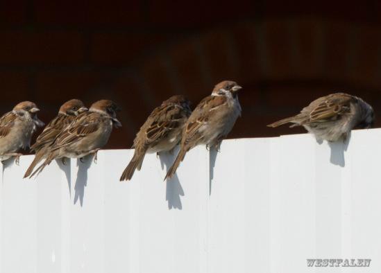 Птица разная - Страница 18 114108-5dea5-58301782-m549x500-u121c3