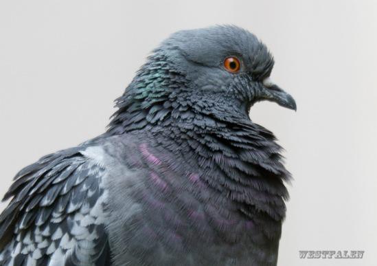 Птица разная - Страница 19 114108-f251a-58358592-m549x500-ue8651
