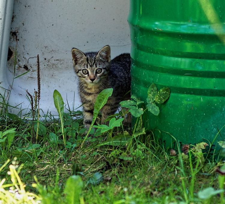 Про кошек - Страница 6 141876-8017d-58194102-m750x740-u34316