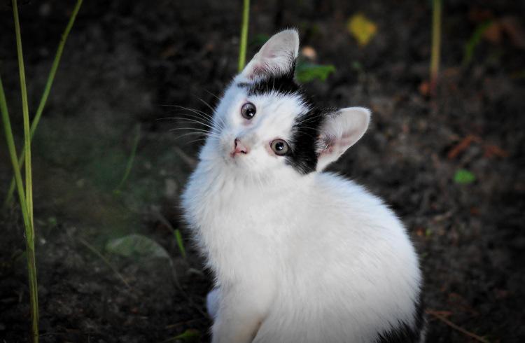 Про кошек - Страница 6 141876-bd441-58341027-m750x740-uaebc0