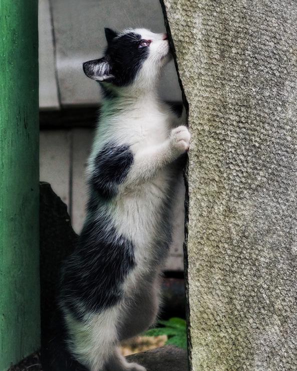 Про кошек - Страница 6 141876-c78c1-58060506-m750x740-ufd432