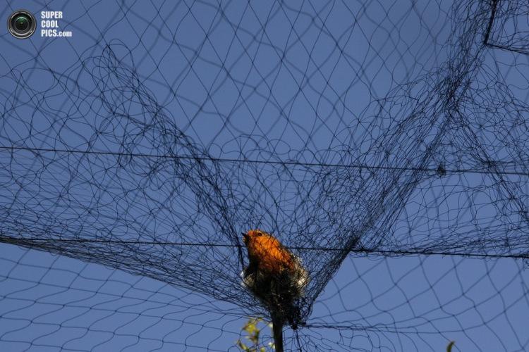 сети для ловли животных купить